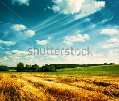 Papiers peints Summer Landscape with Wheat Field and Clouds