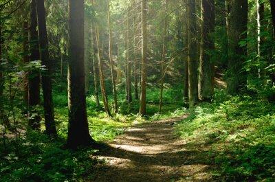 Papiers peints Summer sunny forest