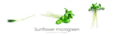 Papiers peints Sunflower microgreen isolated on a white background.