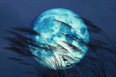 Papiers peints super full harvest moon on night sky back grass flower in the field
