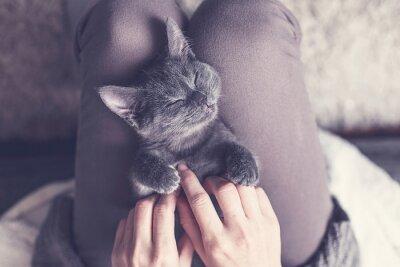 Papiers peints Süßes Kätzchen macht ein Nickerchen