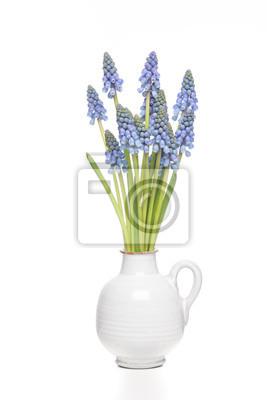 Papiers peints Tas isolé de hyacints de raisin dans un vase blanc