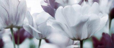 Papiers peints Teinté, tulipes, concept