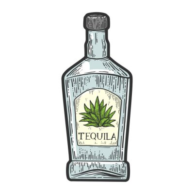 Tequila bottle mexican alcohol color sketch engraving vector illustration. T-shirt apparel print design. Scratch board imitation. Black and white hand drawn image.