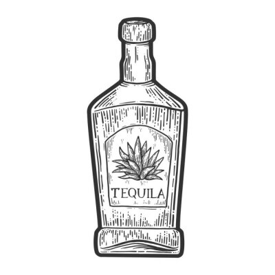 Tequila bottle mexican alcohol sketch engraving vector illustration. T-shirt apparel print design. Scratch board imitation. Black and white hand drawn image.