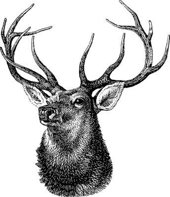 T te de cerf papier peint papiers peints stag nativit rennes - Dessin de tete de cerf ...