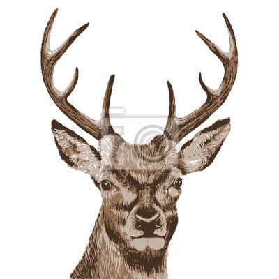 Tête de cerf - illustration vectorielle