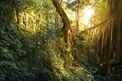 Papiers peints Texture des arbres et des feuilles de la forêt.