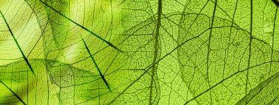 Papiers peints Texture feuillage vert