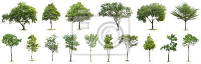 Papiers peints The collection of trees isolated on white background. Beautiful and robust trees are growing in the forest, garden or park.