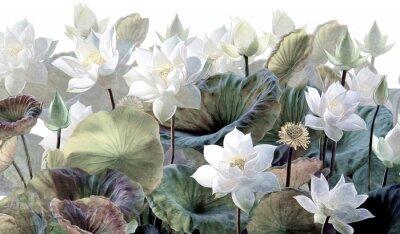 Papiers peints The scenic Lotus flowers.