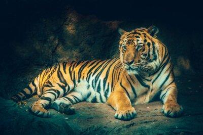 Papiers peints Tigre avec fond de montagne de pierre dans sombre sombre sombre dangereux, effet de couleur de sentiment effrayant.