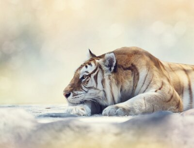 Papiers peints Tigre, reposer, rocher