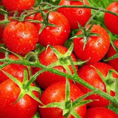Papiers peints tomates rouges