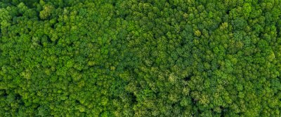 Papiers peints top view on the forest panoramic
