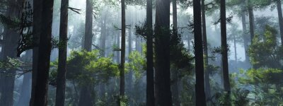 Papiers peints Trees in the fog. The smoke in the forest in the morning. A misty morning among the trees. 3D rendering