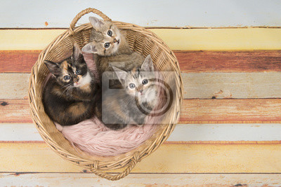 Trois chatons chat mignon dans un panier en osier en levant
