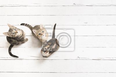Trois chatons mignons en levant vu d'un angle élevé sur un fond en bois blanc