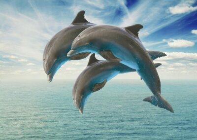 Papiers peints trois dauphins sautant