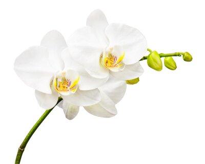 Papiers peints Trois jours et orchidée isolé sur fond blanc.