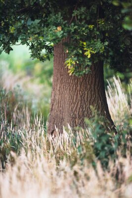 Papiers peints Tronc d'arbre entre les hautes herbes jaunes.