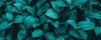 Papiers peints tropical leaves, abstract green leaves texture, nature background