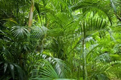 Papiers peints Tropical, luxuriant, vert, palmier, jungle, fond