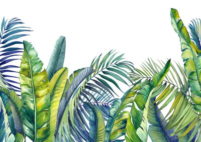 Papiers peints Tropical palm and banana leaves. Jungle wallpaper. Isolated watercolor background.