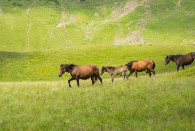 Papiers peints Troupeau, chevaux, marche, long, montagne, pré