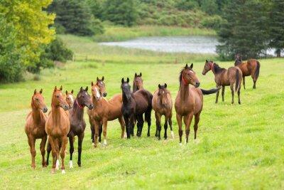 Papiers peints troupeau de cheval