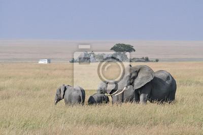 Troupeau, Éléphants, à, les, fond, a, safari, camion, dans, a, herbe, africaine, paysage