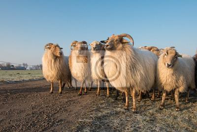 Troupeau, rural, mouton, route, bleu, ciel