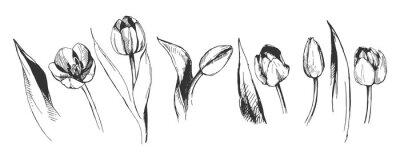 Papiers peints tulipe fleur graphique illustration décoratif nature art