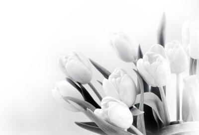 Papiers peints Tulipes blanches sur fond blanc bw