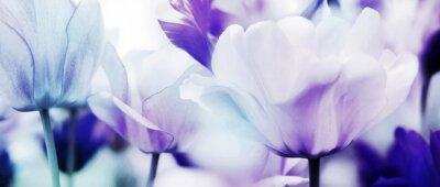 Papiers peints tulipes cyan violet ultra léger