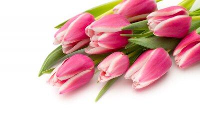 Papiers peints Tulipes roses sur le fond blanc.