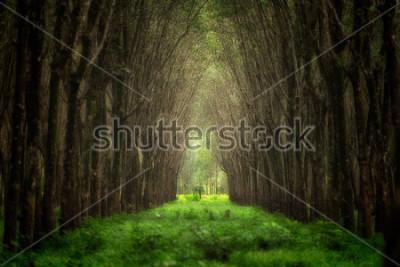 Papiers peints Tunnel d'arbre imaginaire. Belle nature forêt fantaisie.