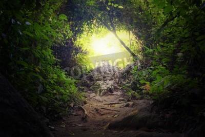 Papiers peints Tunnel naturel dans la forêt tropicale de la jungle Chemin de chemin chemin à travers luxuriante, le feuillage et les arbres de la forêt tropicale ombre à feuilles persistantes Mysterious magic backgr