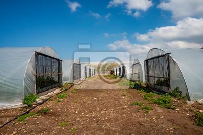 Papiers peints Tunnel pepper cultivation greenhouse