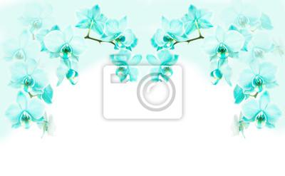 Turquoise, fleurir, orchidée, fleurs, cadre, cadre ...