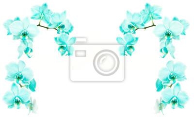 Turquoise, fleurir, orchidées, blanc, fond, côtés, sommet, cadre, espace, texte