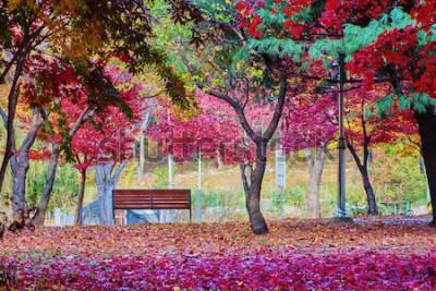 Papiers peints Un banc dans un parc avec de nombreuses feuilles d'érable rouge. Endroit paisible.