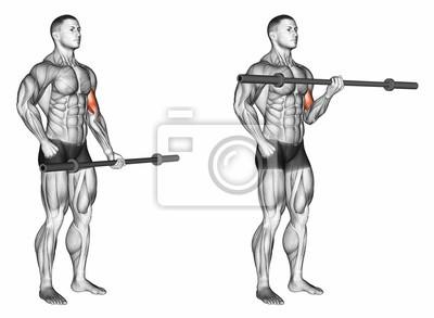 Un Bras Biceps Boucle Avec Barre Exercice Pour La Musculation Papier Peint Papiers Peints Carpe Haltere Impliques Myloview Fr