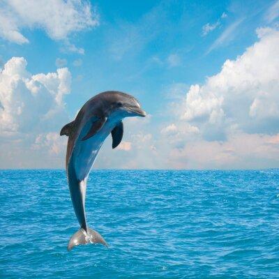 Papiers peints un dauphins de saut