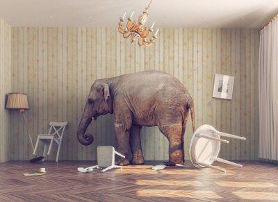 Papiers peints Un éléphant dans une chambre