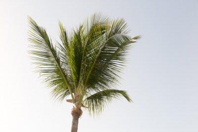 Papiers peints Un palmier à noix de coco et un ciel bleu