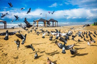 Papiers peints Un troupeau de pigeons est bruyant