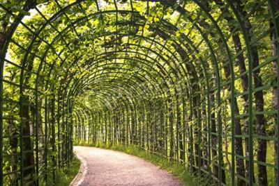 Papiers peints Une belle arcade verte dans le parc avec un chemin.