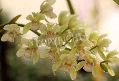 Papiers peints Une belle orchidée en Thaïlande
