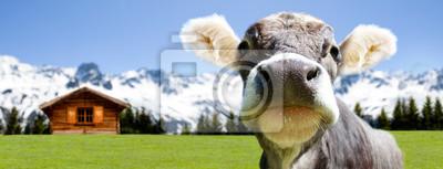 Vache à l'alpage